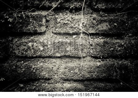 Dark Gray rough brick cover with mosses for texture background