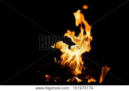 burning fire on a black background. The concept of nature.
