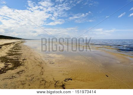 Deserted coast of the Baltic Sea in the early spring. Seagulls