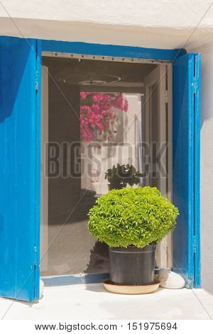 Beautiful decoration pot with green flower in it outside of a window at Paros island in Greece.