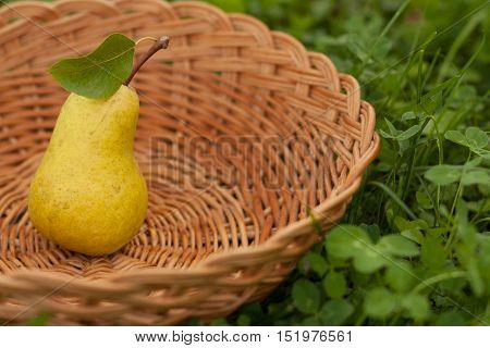 One Fresh Ripe Yellow Pears With Leaf In Wicker Basket On Green Grass Outdoor Close-up. Fresh Ripe Yellow Pear. Selective Focus.
