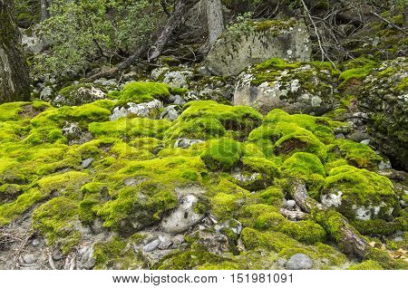 Little rocky clearing in the woods on the hillside. Altai Mountains Russia.
