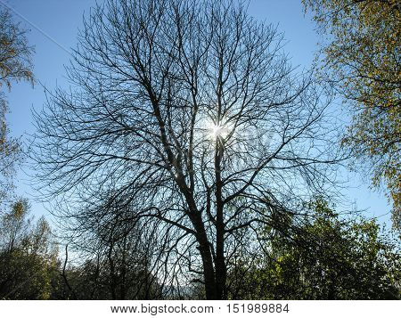 Pale autumn sun throws rays through the cool shade of a tree bare