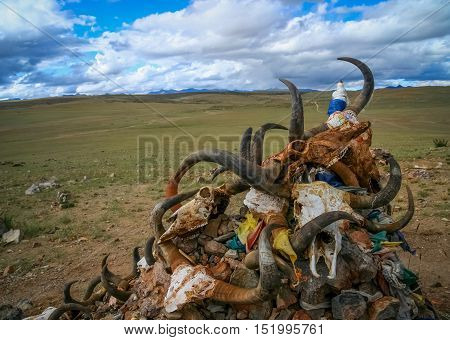 Pile of animal skulls near small old Tibetan monastery at the holy Lake Manasarovar, Tibet