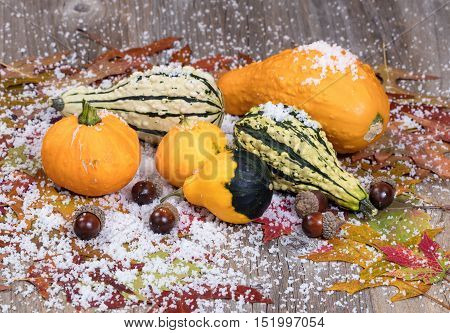 Close up view of seasonal gourds with autumn leaves acorns and snow on rustic wooden boards. Selective focus on front acorns.