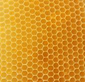 picture of honeycomb  - honeycomb background - JPG