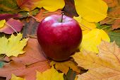 Apple Against Autumn Leaves