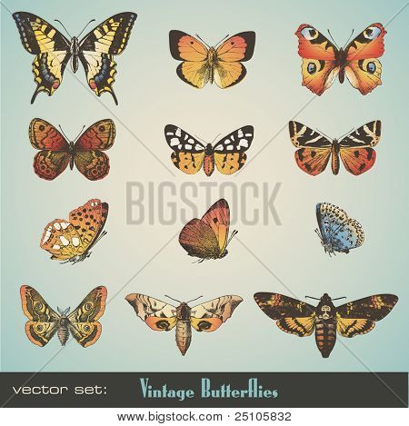 vector set: detailed vintage butterflies