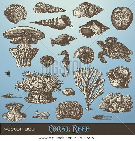 vector set: coral reef - variety of sea-design elements including different corals, shells and animals