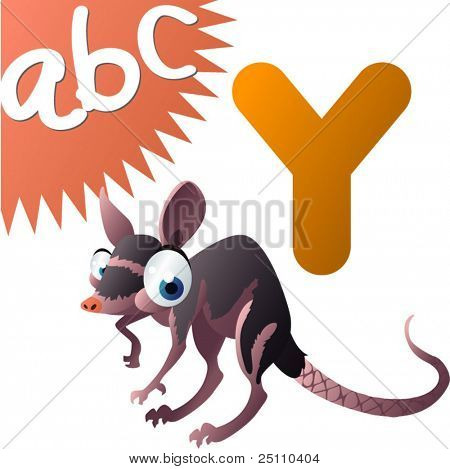 animals alphabet: Y is for Yapok