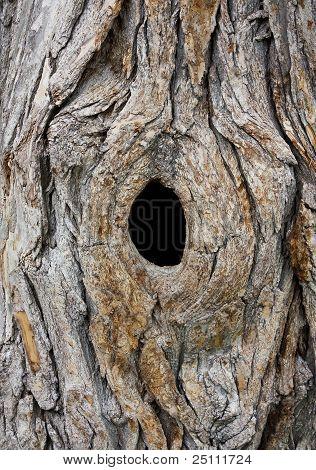 Hole In Tree Trunk