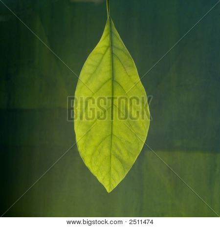 Portrait Of A Leaf