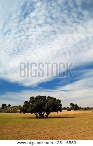 Spanish landscape with a tree and cultivated dry soil