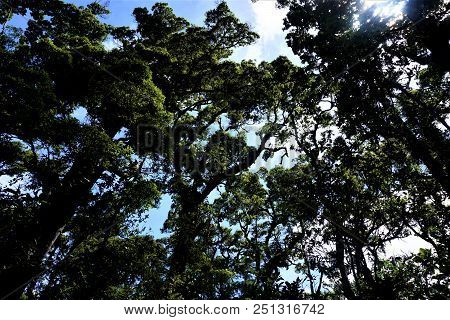 Trees And Sky In The
