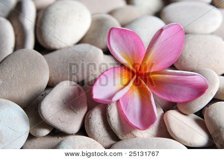 spa and aromatherapy stones with frangipani