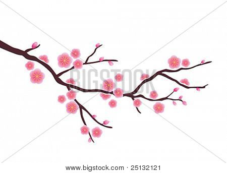 Vector Cherry blossom in spring time