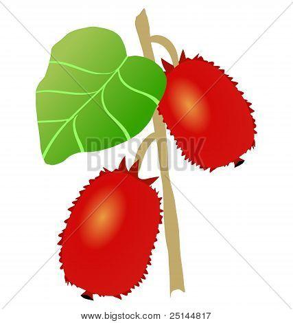 actinidia plant