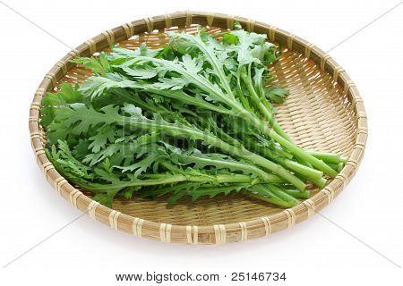 chrysanthemum greens, garland chrysanthemum, shungiku
