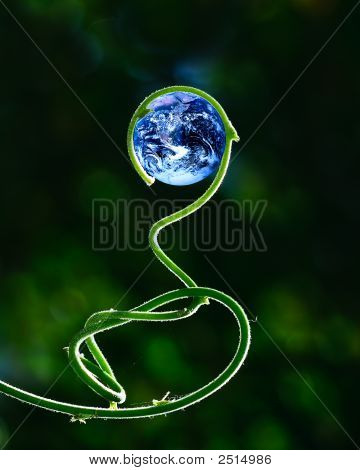 Green Stalk And Earth