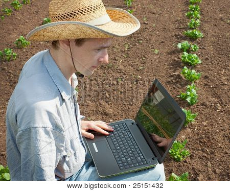 The Young Man  Examines Shoots Of A Potato