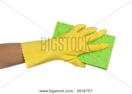 Sponge And Glove