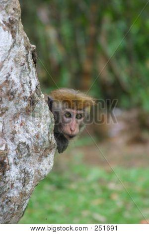 Peering Around The Tree