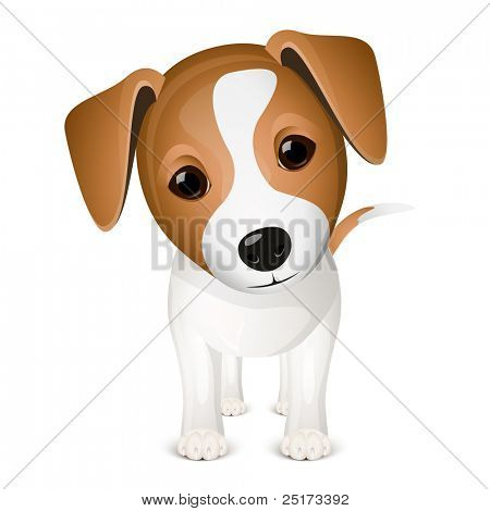 Little jack russel isolated on white background