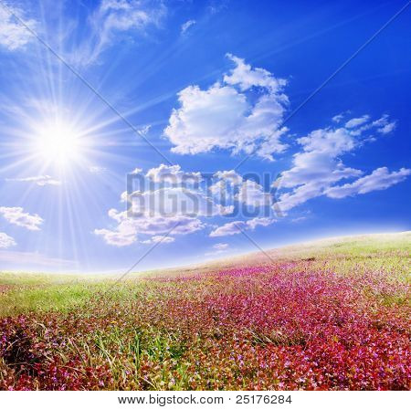 violet field and sun sky
