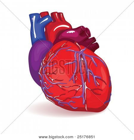 isolated heart in vector