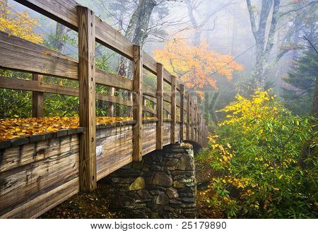 Autumn Appalachian Hiking Trail Foggy Nature Blue Ridge Fall Foliage