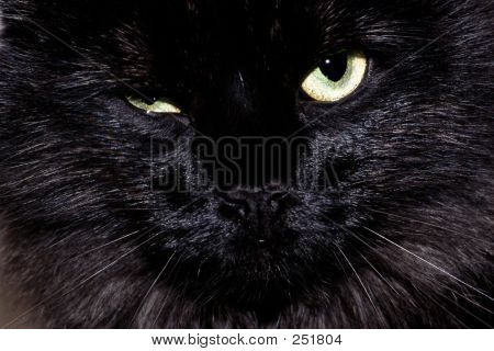 Annoyed Black Cat