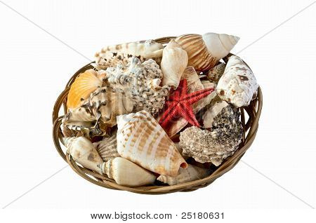 Shells and red starfish in a basket