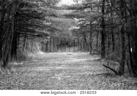 Winter Pathway In The Park