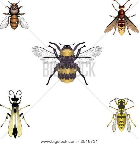 Bees_Wasps