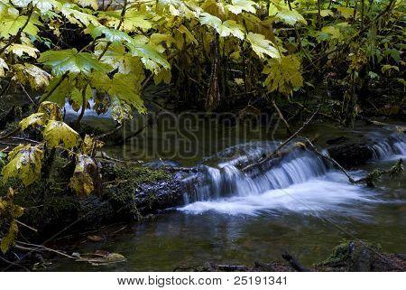Creek Near Proxy Falls