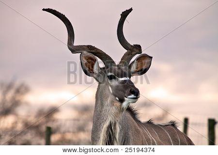 Kudu sunset