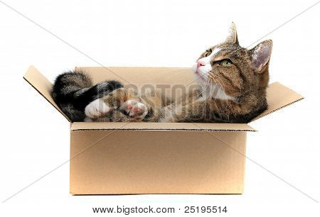 Little Cat In removal box