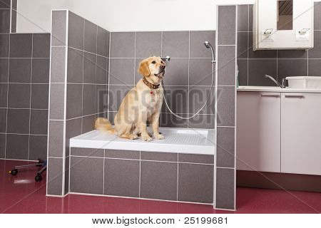 dog sitting in shower