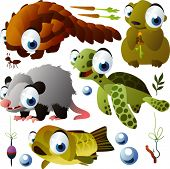 foto of opossum  - vector animals - JPG