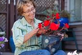 foto of senior-citizen  - Cheerful senior woman looking at flower pot - JPG