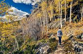 Woman tourist walking on trail in aspen grove at autumn in Rocky Mountain National Park. Colorado, U poster