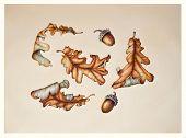 Botanical Illustration Set Of Autumn Oak Leaves And Acorns On Vintage Background. Vintage Watercolor poster