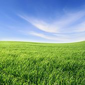pic of lawn grass  - green grass and blue sky - JPG