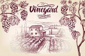 Grape Vine, Vineyard, Grape , Calligraphy Text Hand Drawn Vector Illustration Realistic Sketch. poster