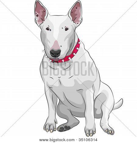 Vector Cartoon Bull Terrier Dog Breed Sittong