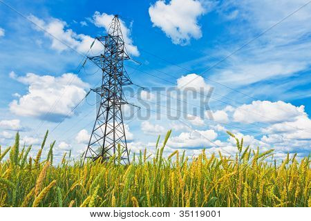 Wheat Field And Electrical PowerlinesIn Summer Day
