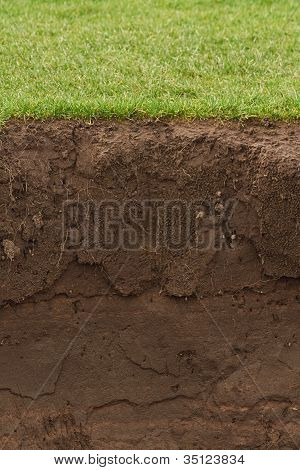 Trimmed Grass Over Exposed Soil