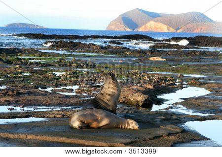 Galapagos Shoreline