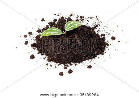 Green Plant In Pile Of Soil