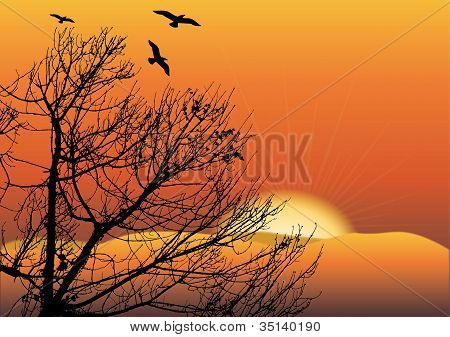 Black Tree In Sunset